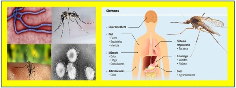 ALERTA DE NUEVA EPS POR AUMENTO EN CASOS  DE MALARIA