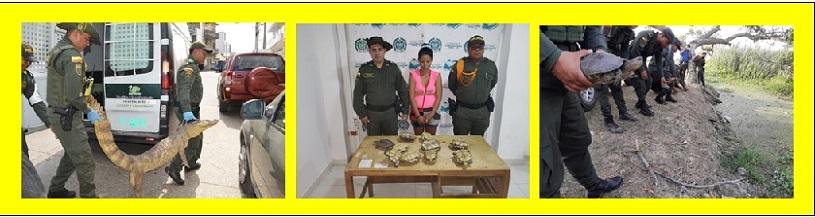 DELITOS AMBIENTALES EN LA MIRA POLICIAL, 33 CAPTURADOS Y 454 ESPECIES RECUPERADAS